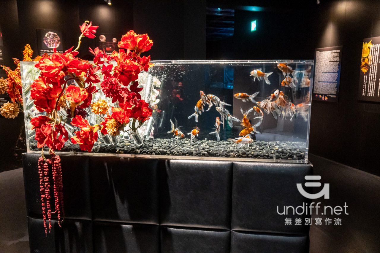 【熊本展覽】Art Aquarium 金魚展 》燈光與金魚共舞的奇幻展覽 20