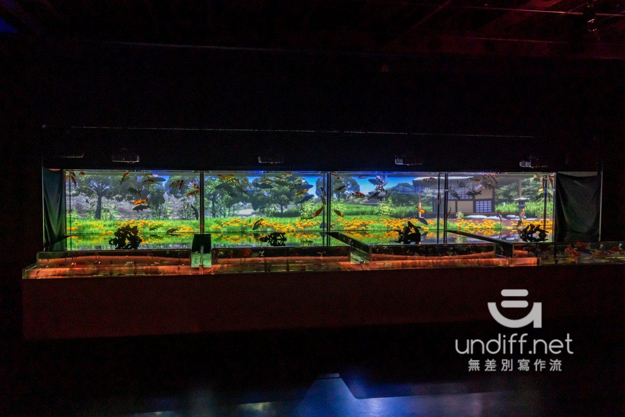 【熊本展覽】Art Aquarium 金魚展 》燈光與金魚共舞的奇幻展覽 30