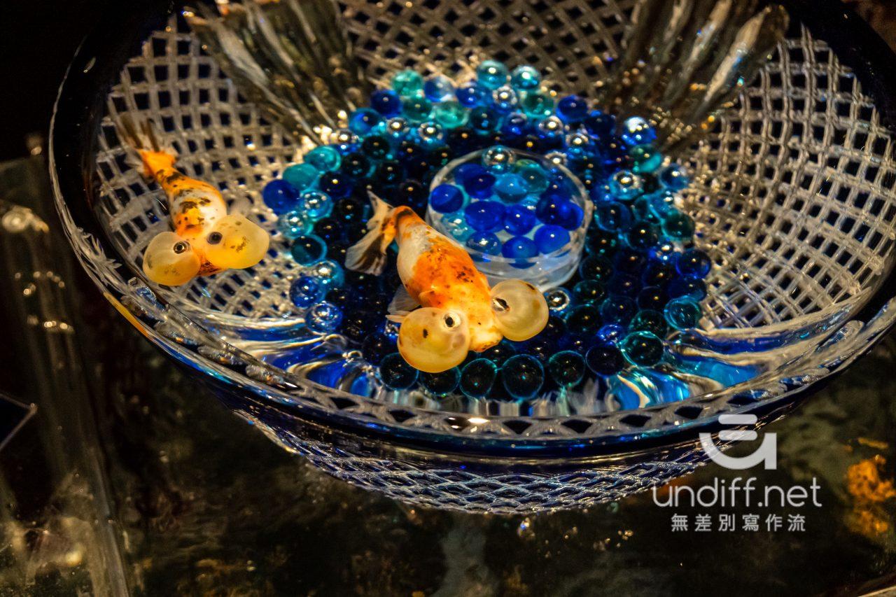 【熊本展覽】Art Aquarium 金魚展 》燈光與金魚共舞的奇幻展覽 42